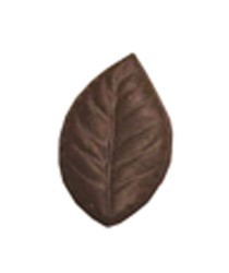 Chocolate Elm Leaf