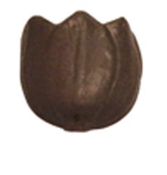 Chocolate Tulip Small